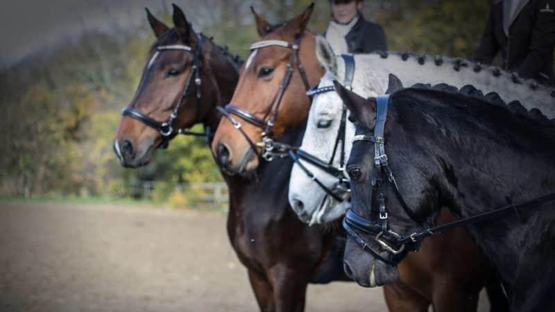 Reitsportbedarf für das Pferd