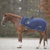 Pferd mit nierendecke